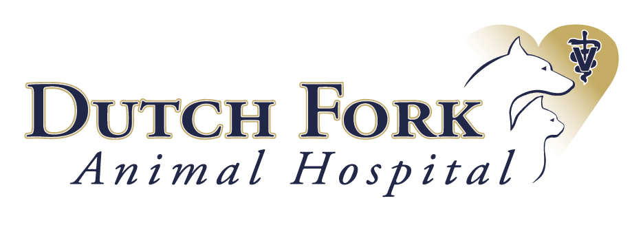 Dutch Fork Animal Hospital